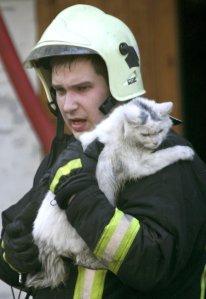 fireman-cat