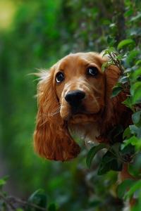 curious-dog-Wallpaper
